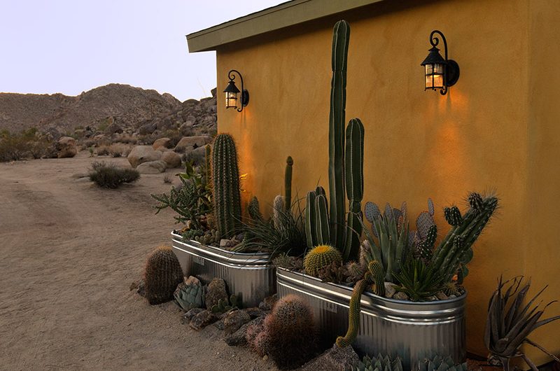 Cactus home